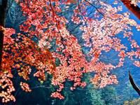 Momijigyakukoua